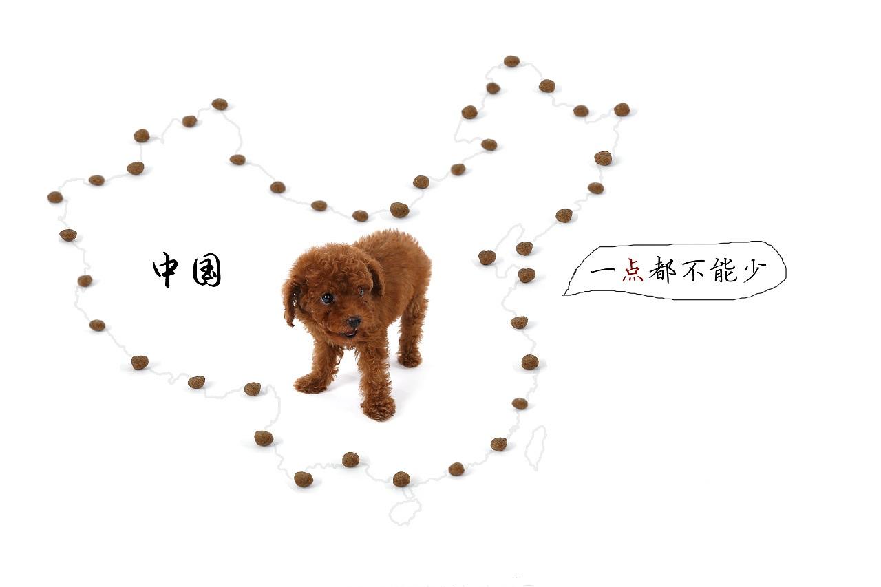 一样的北京,不一样的北京宠物展!